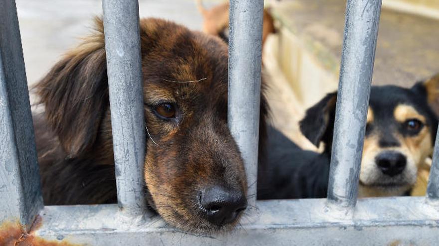 Podemos denuncia la situación de los perros en el albergue de Bañaderos