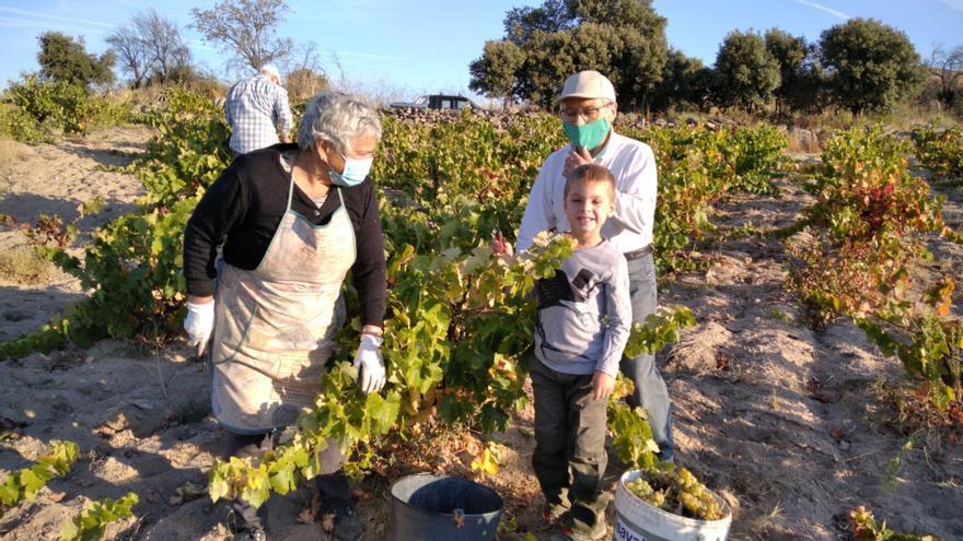 La vendimia de las DO de Zamora supera los 23 millones de kilos este año