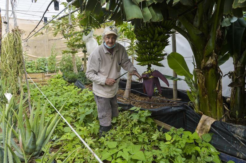 Huertos familiares ecológicos en Ingenio