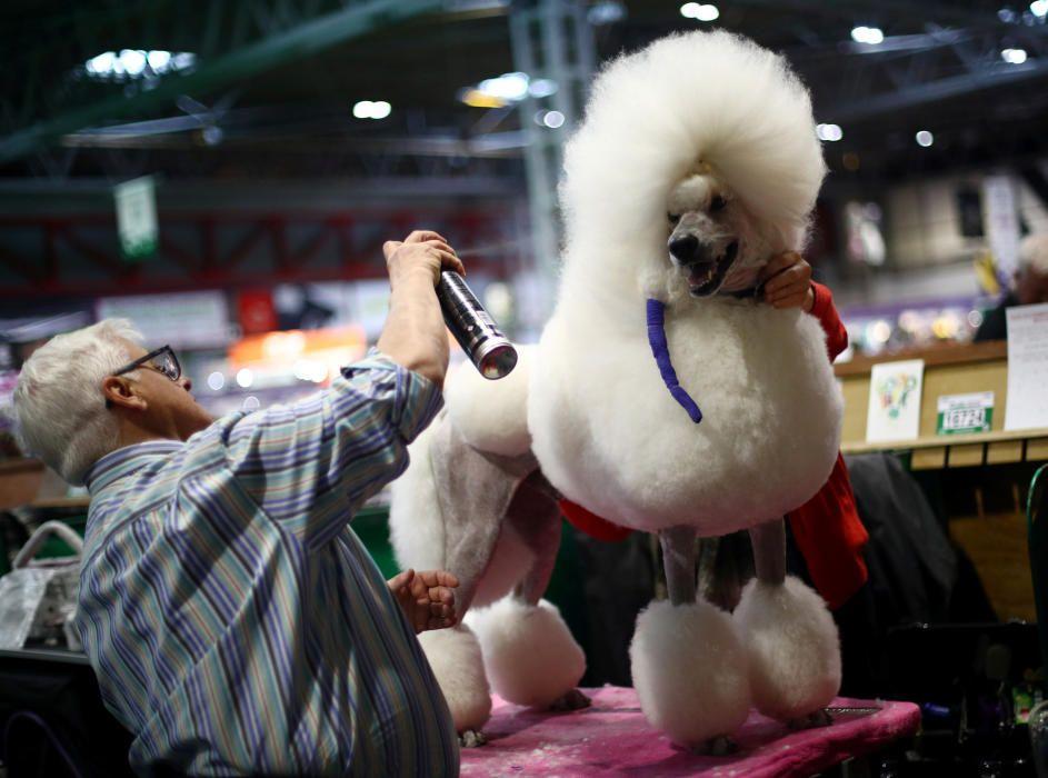 Crufts 2019: L'exhibició de gossos més gran del món