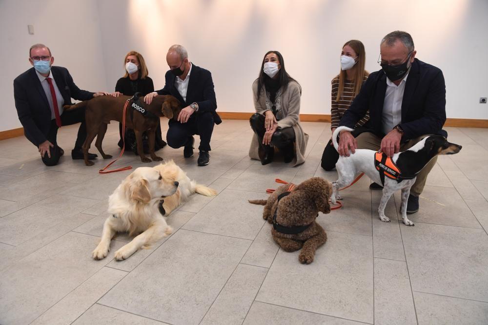 Perros escuderos de víctimas de maltrato