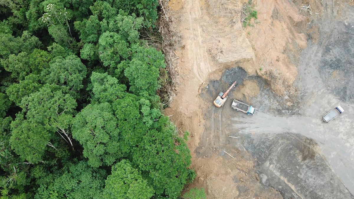 La deforestación en la Amazonía brasileña alcanza su mayor nivel desde 2008.