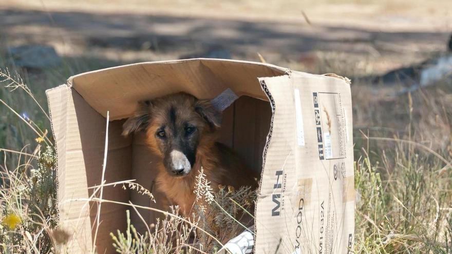 He visto un perro abandonado, ¿qué debo hacer?