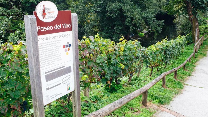 La DOP Vino de Cangas seduce al público con sus caldos