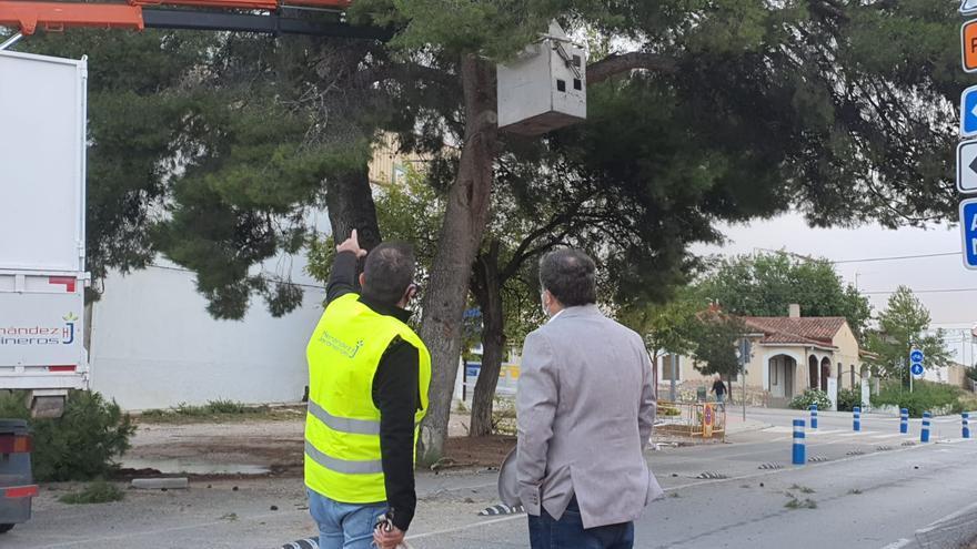Villena continúa con el plan de poda urgente del arbolado urbano para evitar accidentes