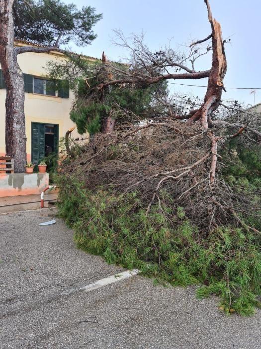 Windhose fegt über Mallorca.