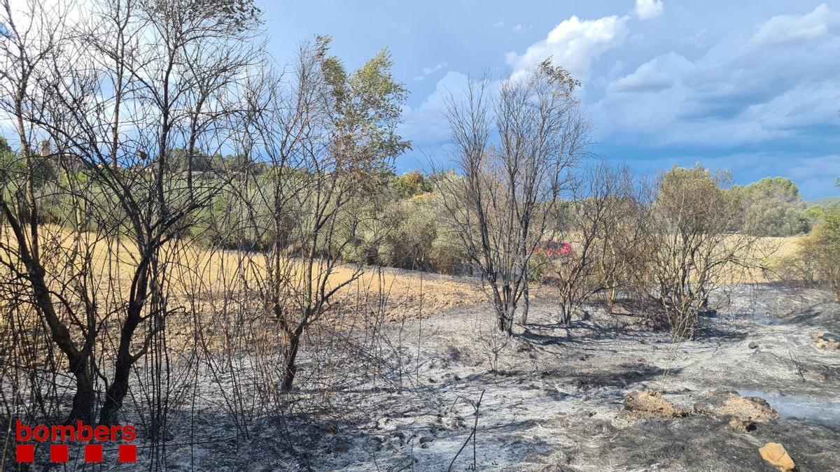 Imatge de la zona cremada a Castellgalí, aquest 4 d'agost