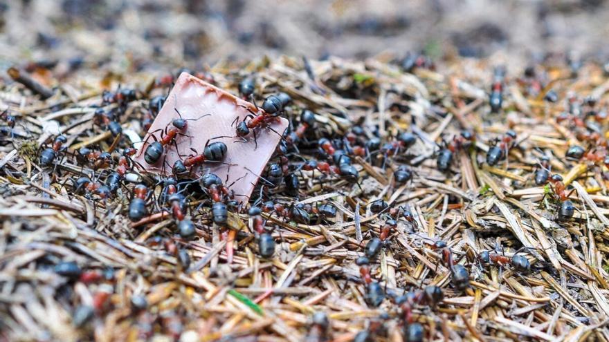 El mundo secreto delas hormigas: matriarcales, ubicuas y abundantes