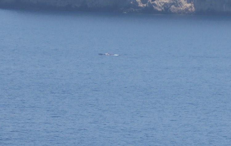 Wale besuchen den Port d'Andratx