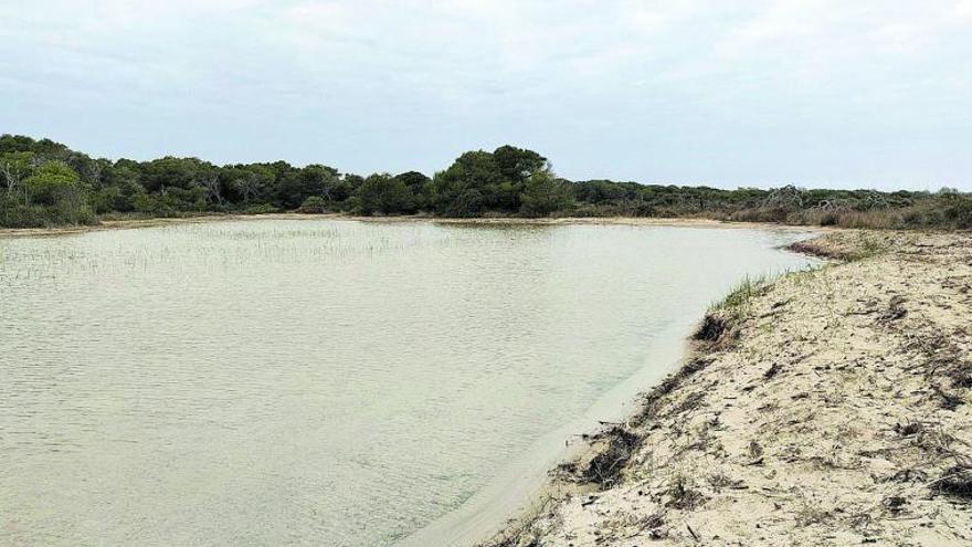 La regeneración de playas salva las malladas de la Devesa