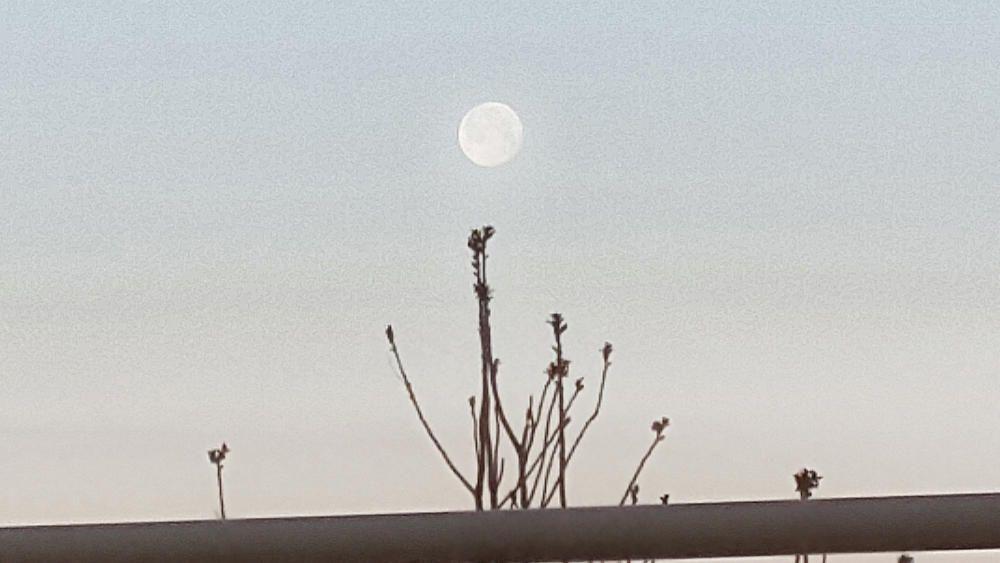 Lluna al 98%.