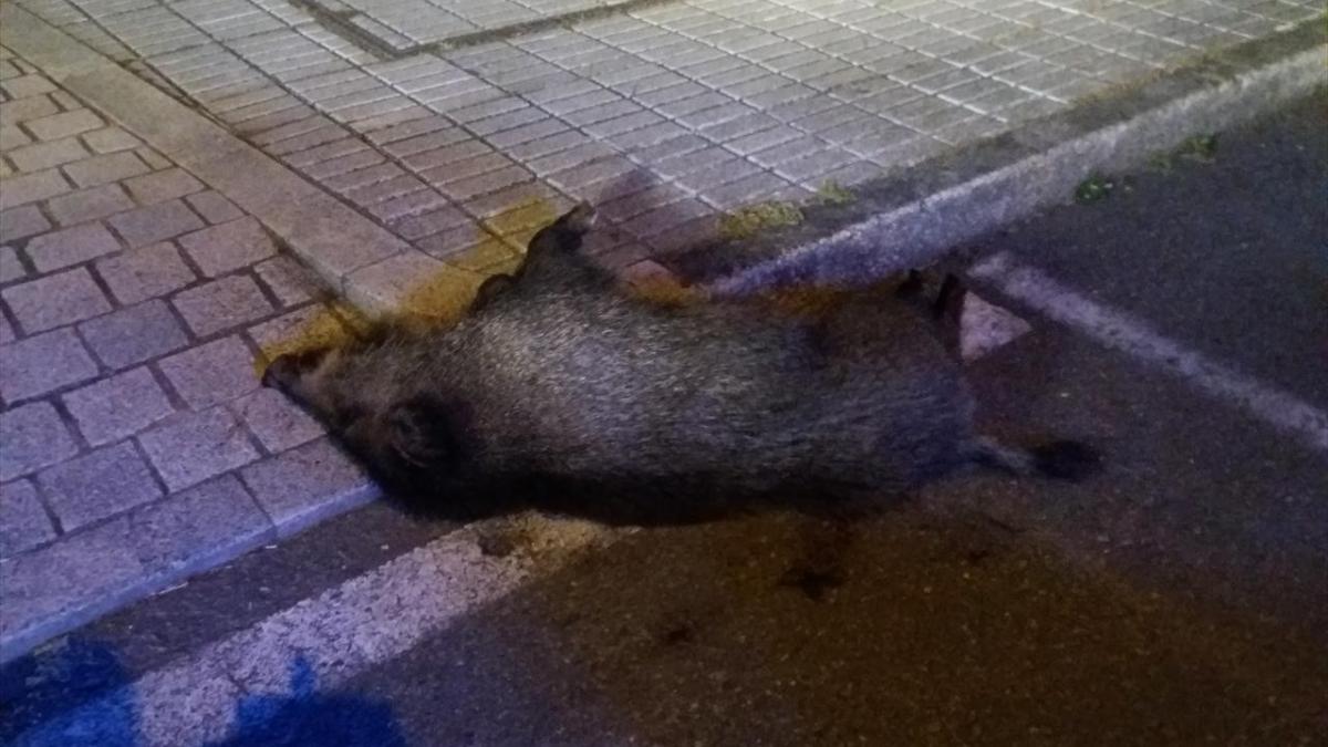 El jabalí abatido / Policía Local