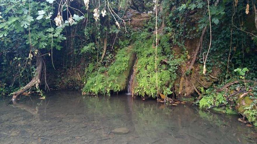 Abren expediente de sanción a una empresa ya multada por captación ilegal de agua del arroyo Bejarano