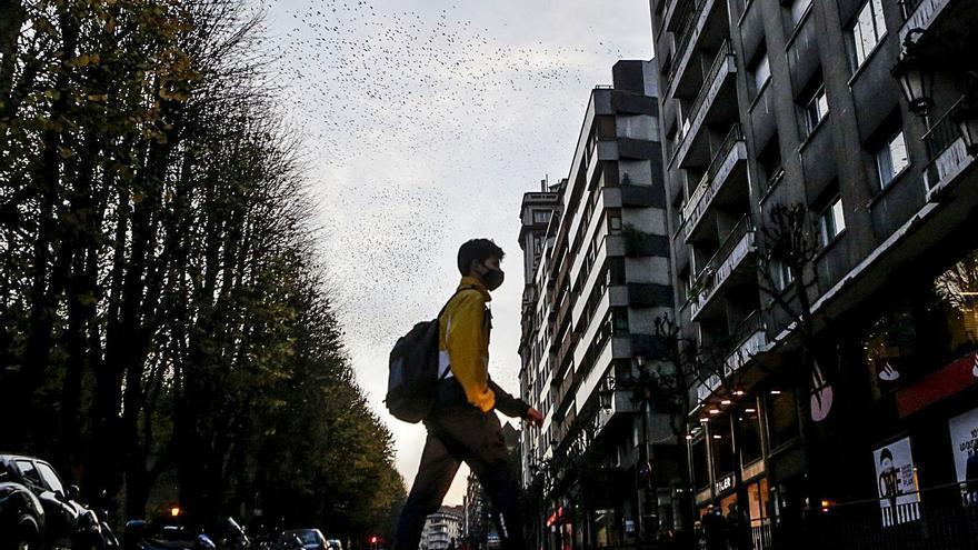 Oviedo declara la guerra a estorninos y ratas con un plan de 280.000 euros