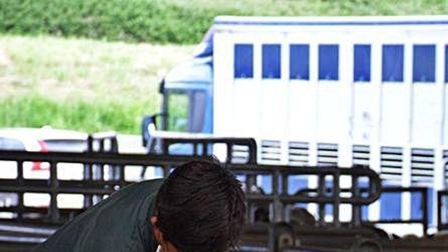 Siero planea que el Mercado Nacional de Ganado funcione también online