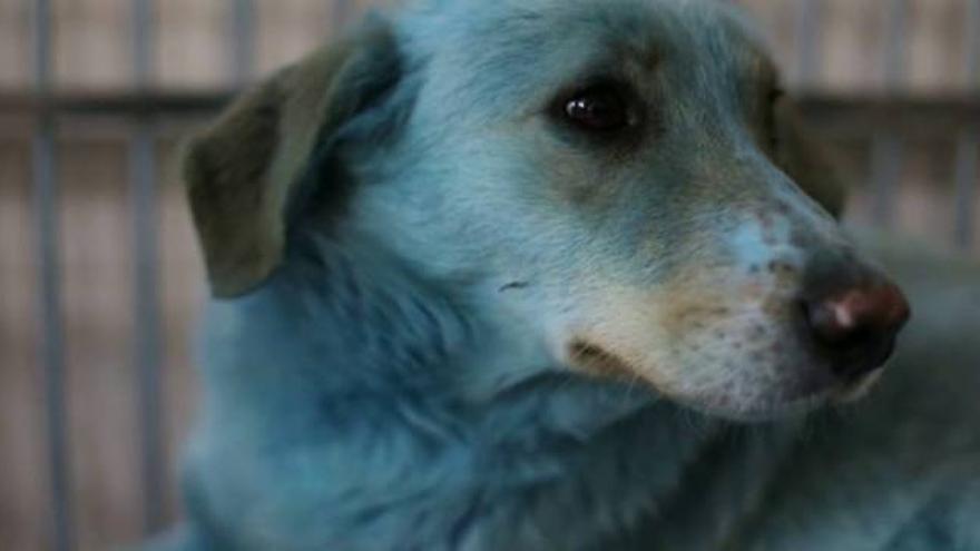 El misterio de los perros azules