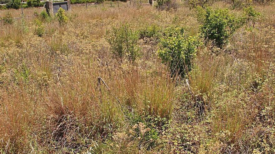 Guardamar activa el primer banco de tierras de la Safor