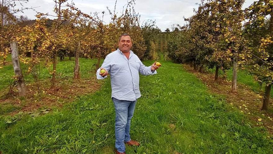 """""""Cosechina"""" de manzana en Siero y alivio para los agricultores: """"Se está vendiendo"""""""