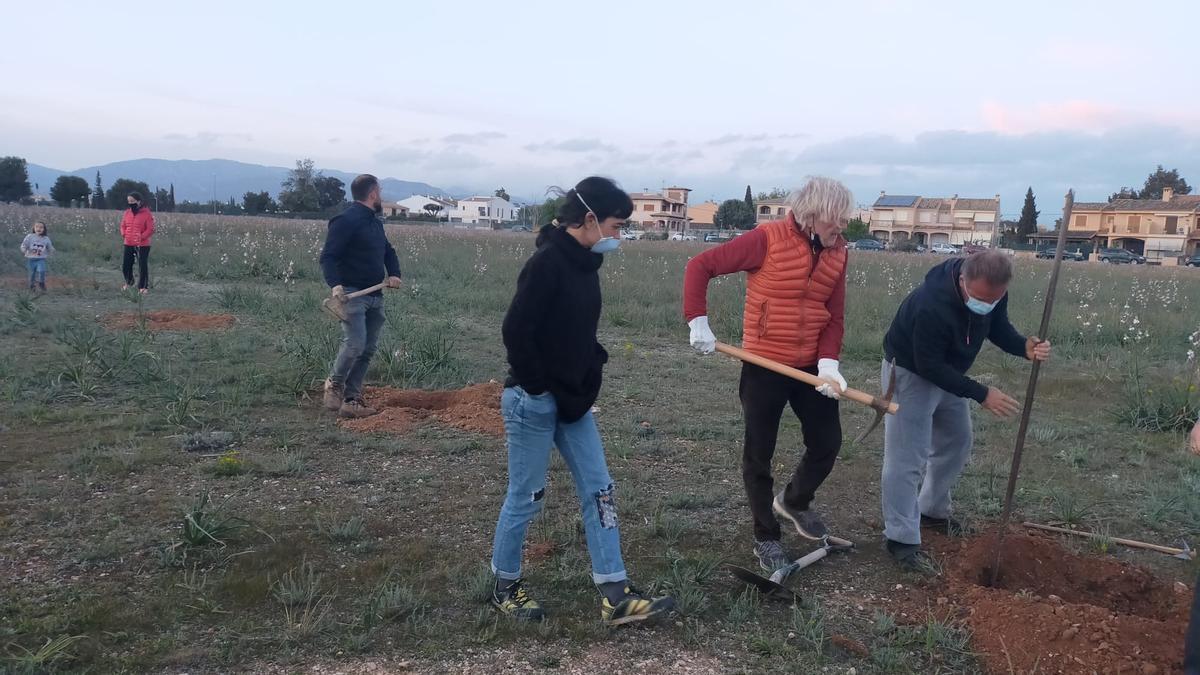 Vecinos de la zona siembran árboles en el solar ubicado junto a Son Bonet.