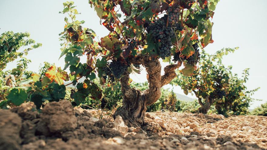 Los mejores Vinos Alicante DOP de 2020