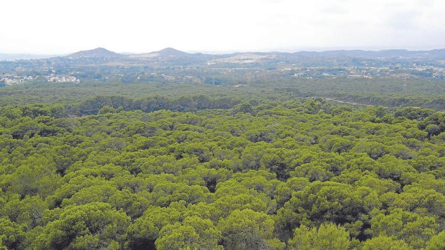 Los bosques absorben al año 1,5 veces las emisiones de CO2 de Estados Unidos