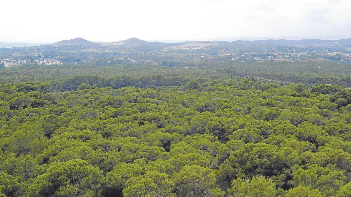 Imagen del Bosque de la Vallesa, en Valencia
