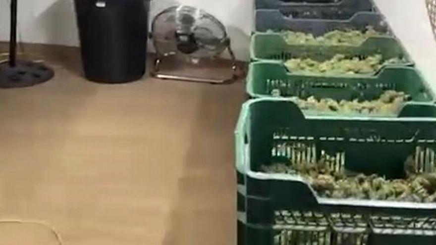 Al menos 64 detenidos en Granada de una red que distribuía marihuana por Europa