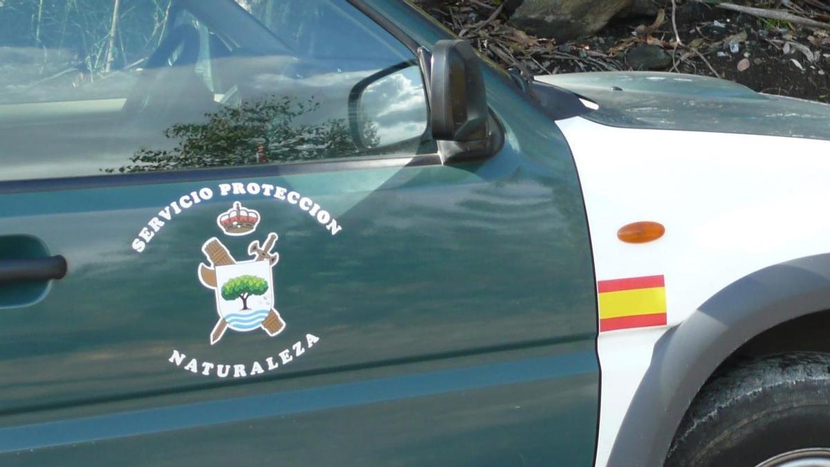 El Seprona de la Guardia Civil investiga el caso.