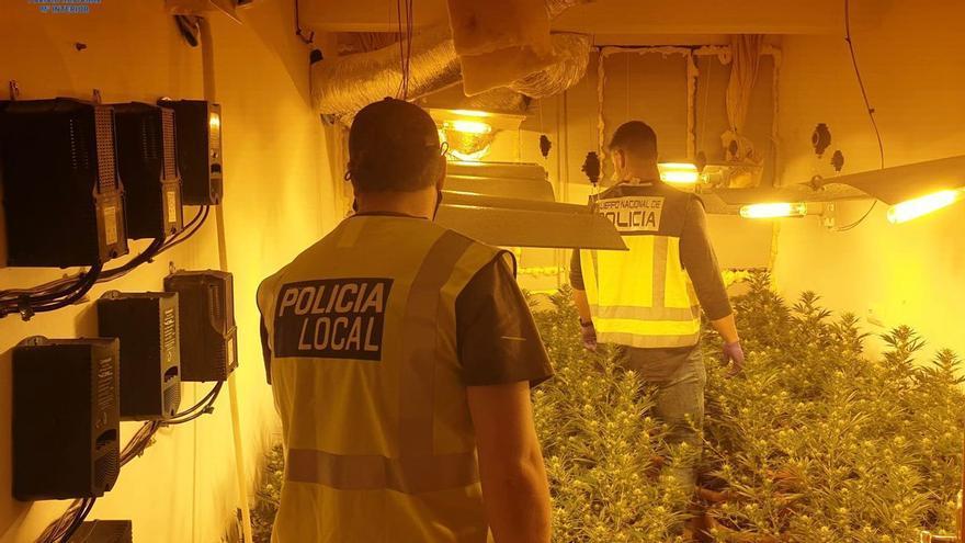 Así es la plantación de marihuana que los narcos instalaron en el piso de una persona vulnerable