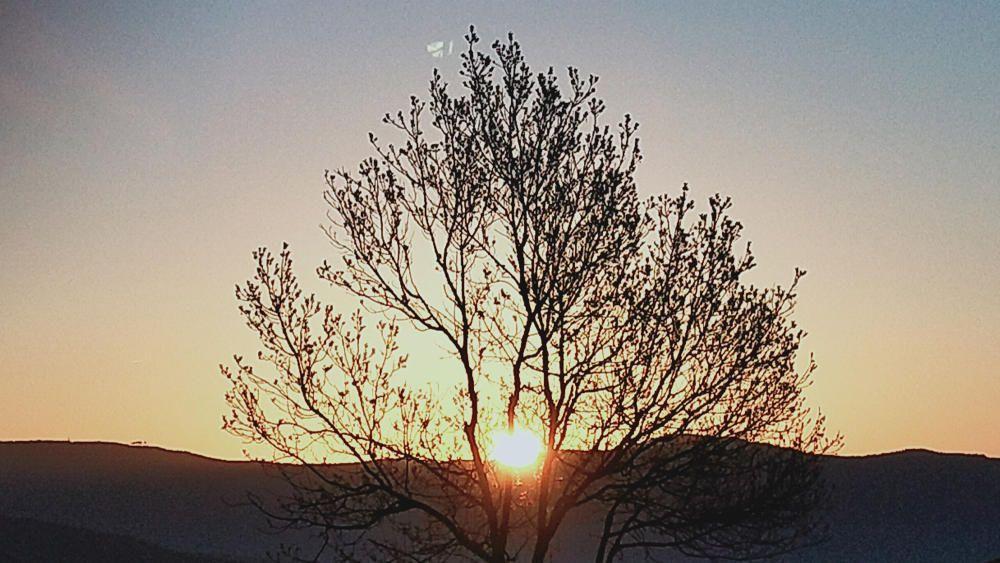 Cardona. Surt el sol per començar a il·luminar i escalfar un dia de cel ras amb uns rajos que es deixen veure entre les branques dels arbres.
