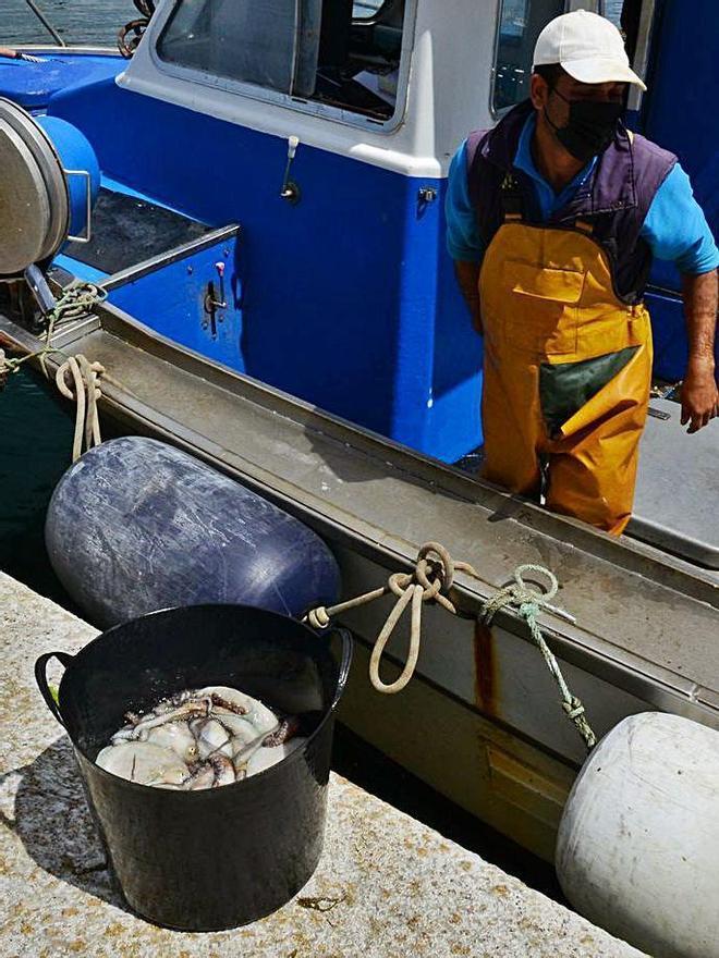 Un tripulante descarga ayer las capturas de pulpo en Bueu. |   // GONZALO NÚÑEZ