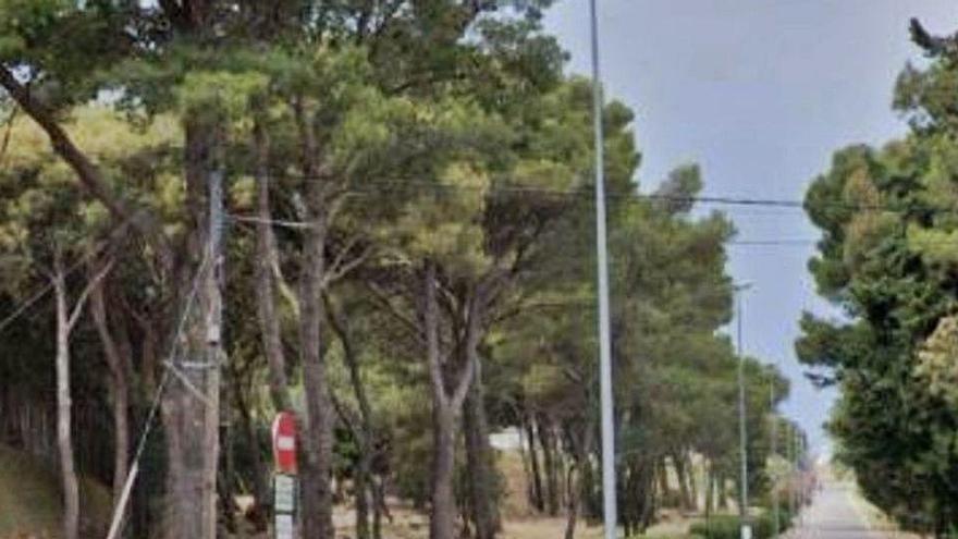 Figueres crea un «bosc d'estornells» per fer-los fora