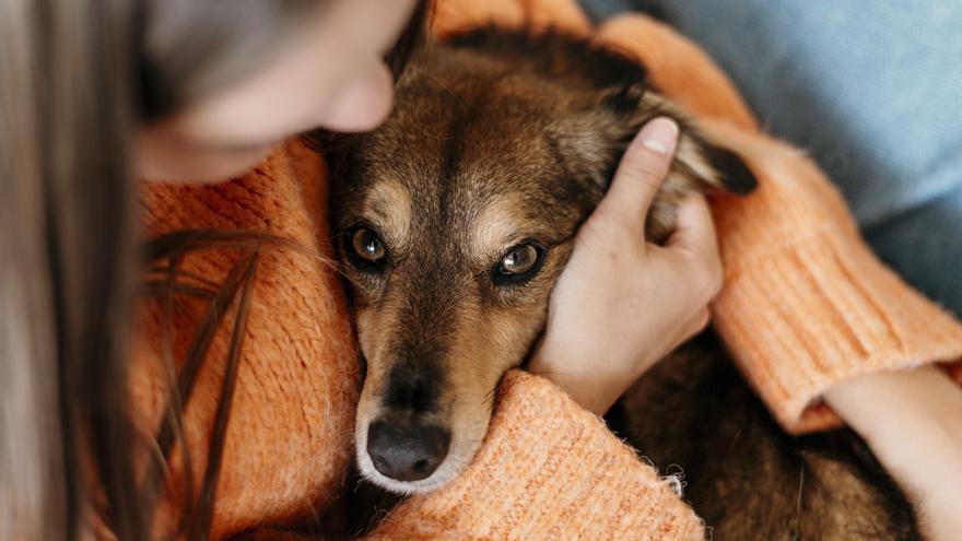 Figueres s'uneix al programa VIOPET per ajudar als animals de les dones víctimes de violència masclista
