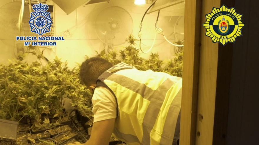 Cinco arrestados con cerca de 900 plantas de marihuana en Torrellano