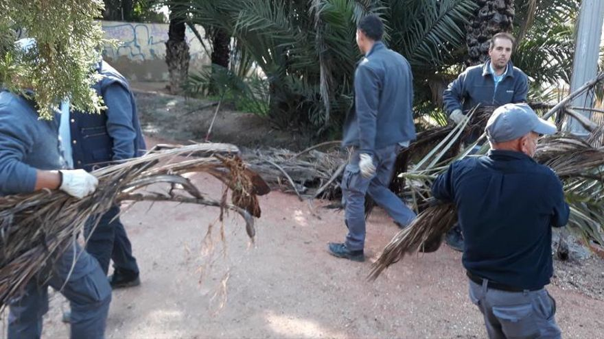 El Ayuntamiento retira las palmas secas y la basura del Hort de la Veleta