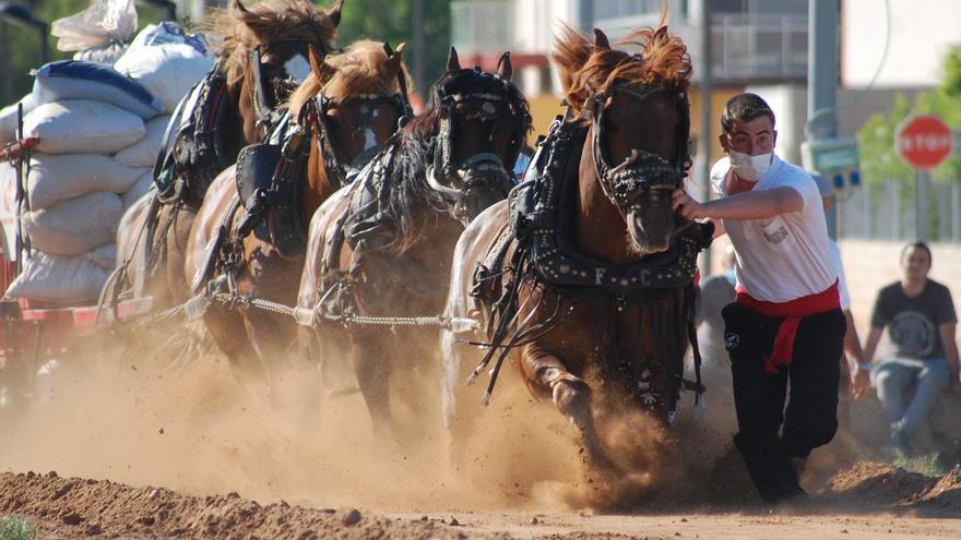 La CEU UCH estudiará los caballos del tiro y arrastre en una investigación pionera