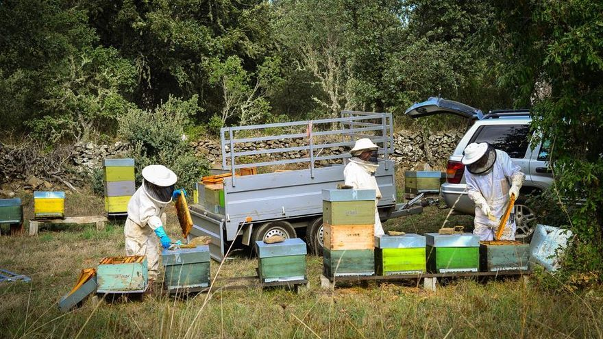 Apicultores de Zamora se beneficiarán del aumento en un 70% de las ayudas a la miel