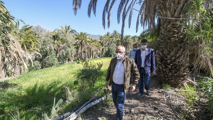 El Cabildo limpiará 6.700 palmeras para prevenir incendios forestales