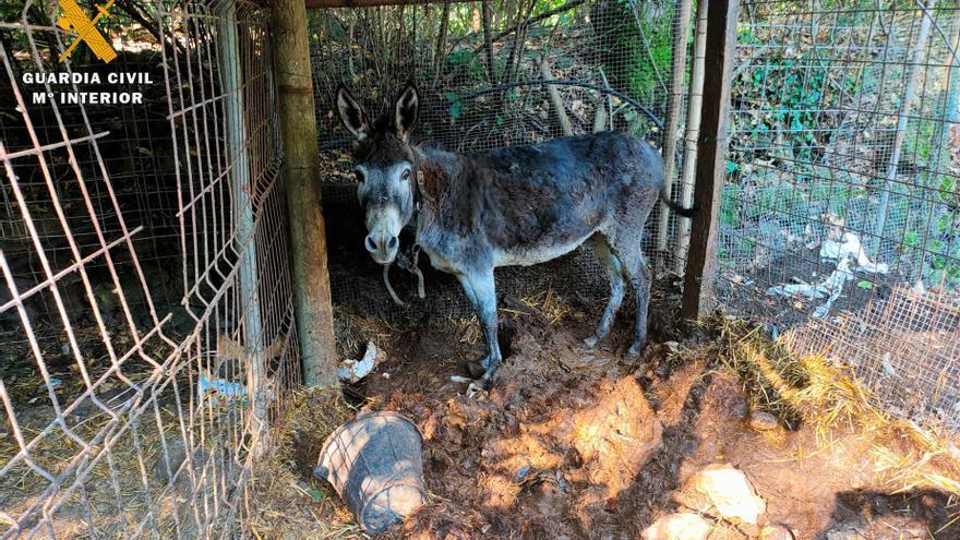 Investiguen un home a Olot per presumpte maltracte animal
