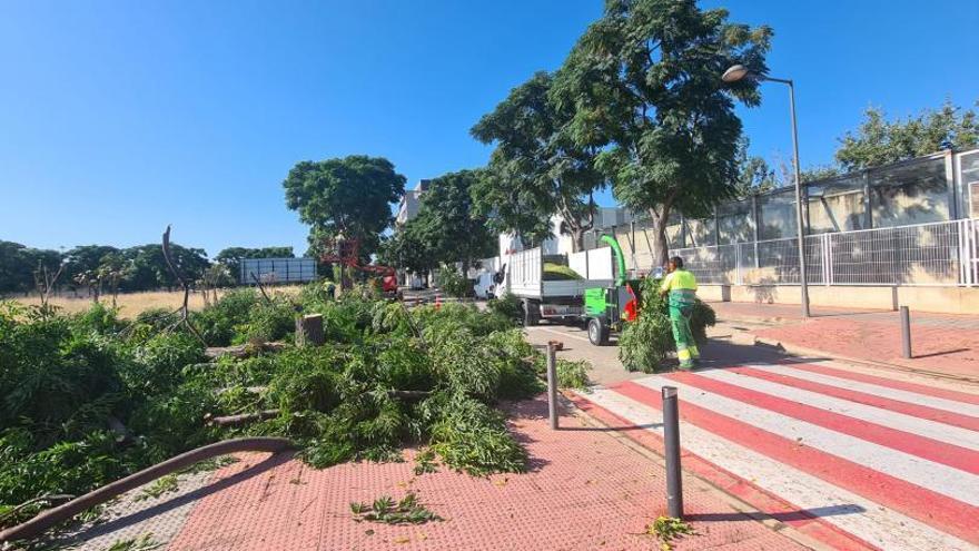Albal repara aceras de La Balaguera y creará un bosque urbano