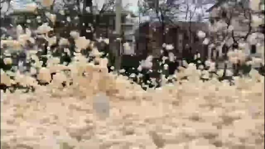 Vídeo: L'escuma de mar inunda Tossa de Mar