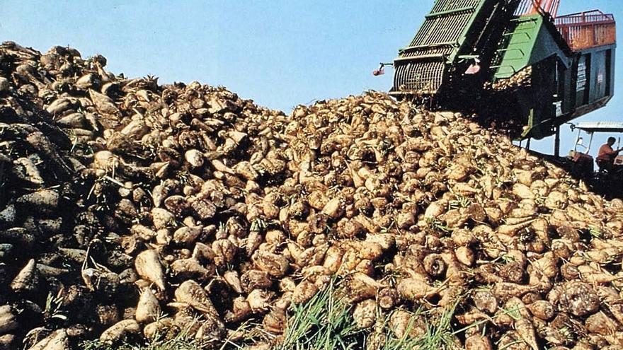 Agroteo y Azucarera confían en la rentabilidad de la remolacha en Benavente