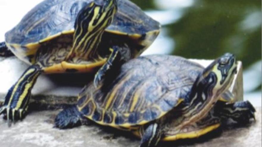 Dues-centes espècies invasores amenacen rius, mars i llacs