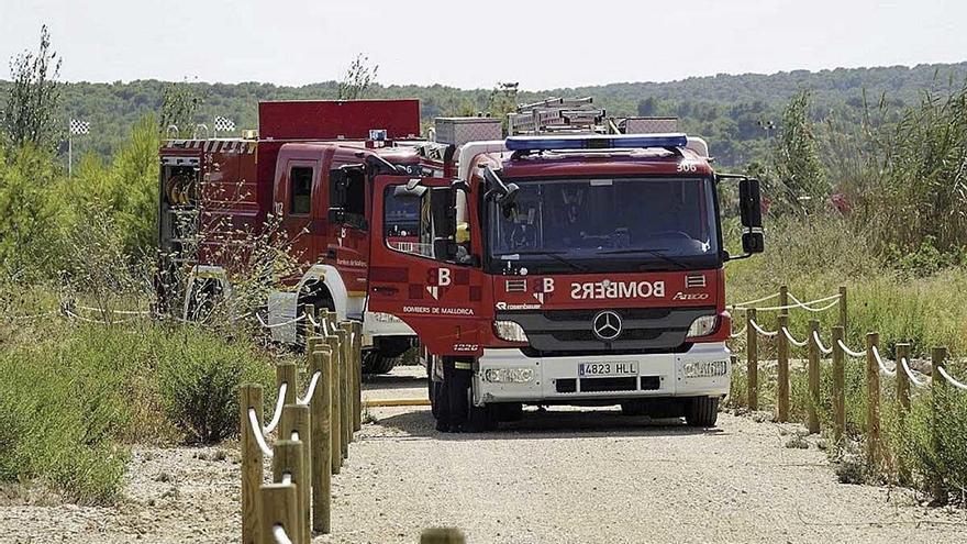 Un incendio arrasa una pequeña zona de pinar en el salobrar de Magaluf