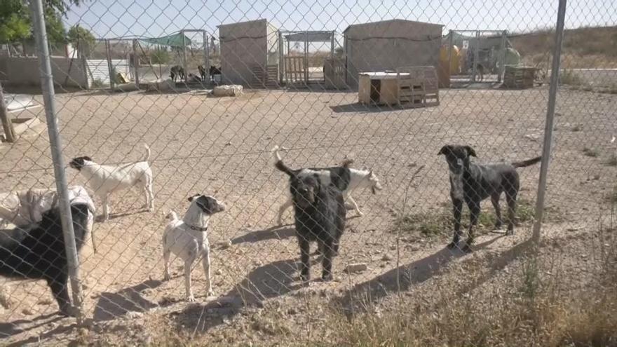 La Protectora de animales de Yecla arrastra una deuda de 15.000 euros con clínicas veterinarias