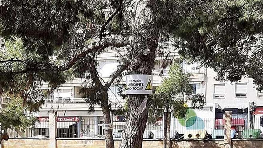 Los pinos del parque Krecovic están afectados de procesionaria