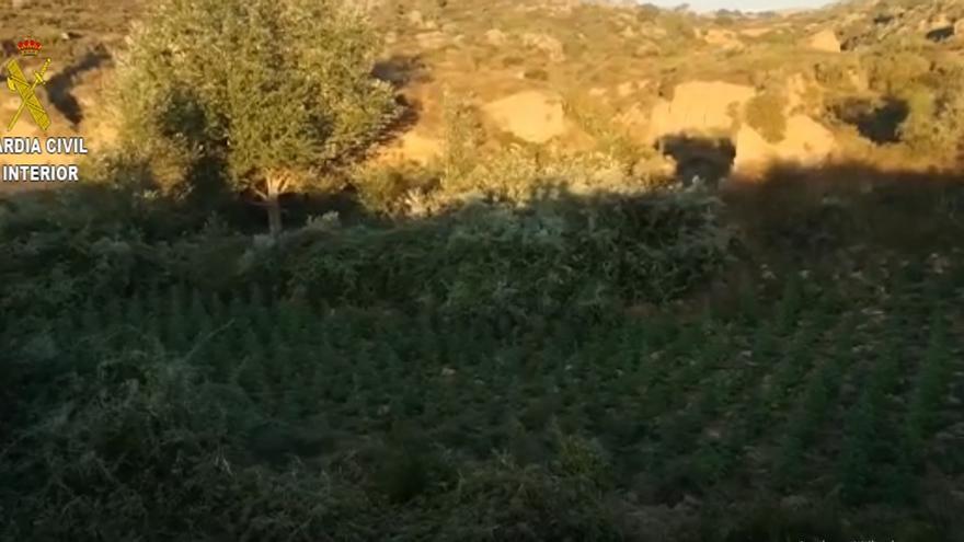 Operación Claber en Huesca en la que se han intervenido más de 12.000 plantas en barrancos del Somontano