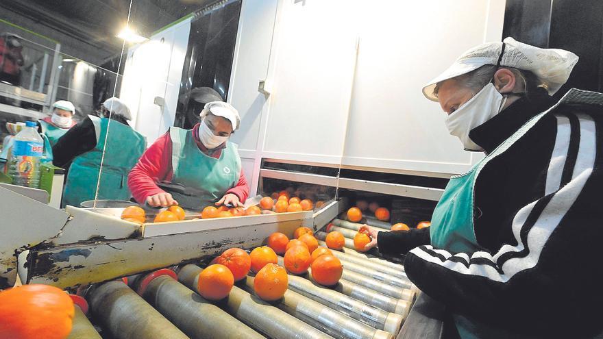 Las cooperativas de Castellón resisten al covid y emplean a 9.000 personas