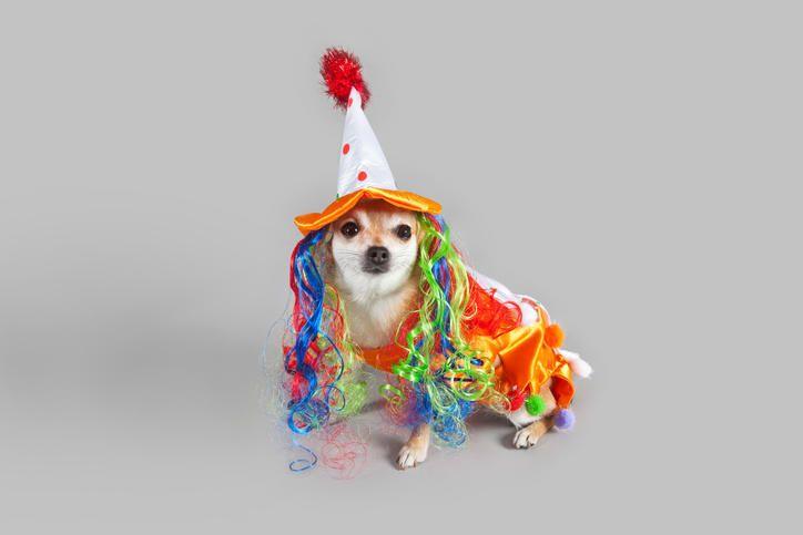 ¿Es bueno disfrazar a nuestras mascotas?