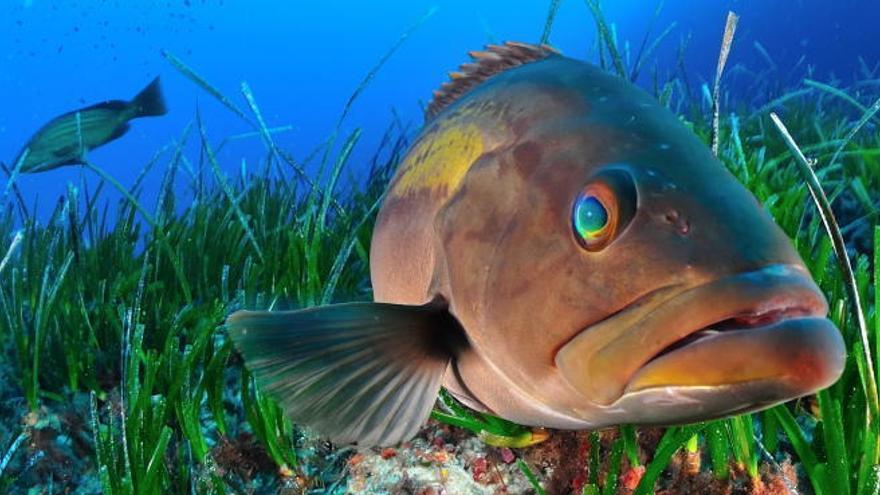 Àrees marines protegides: on les espècies reneixen